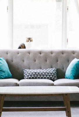 salon avec canapé gris coussins bleus table basse