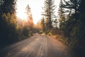 Route de campagne bordée de sapins avec lueur du soleil en fond